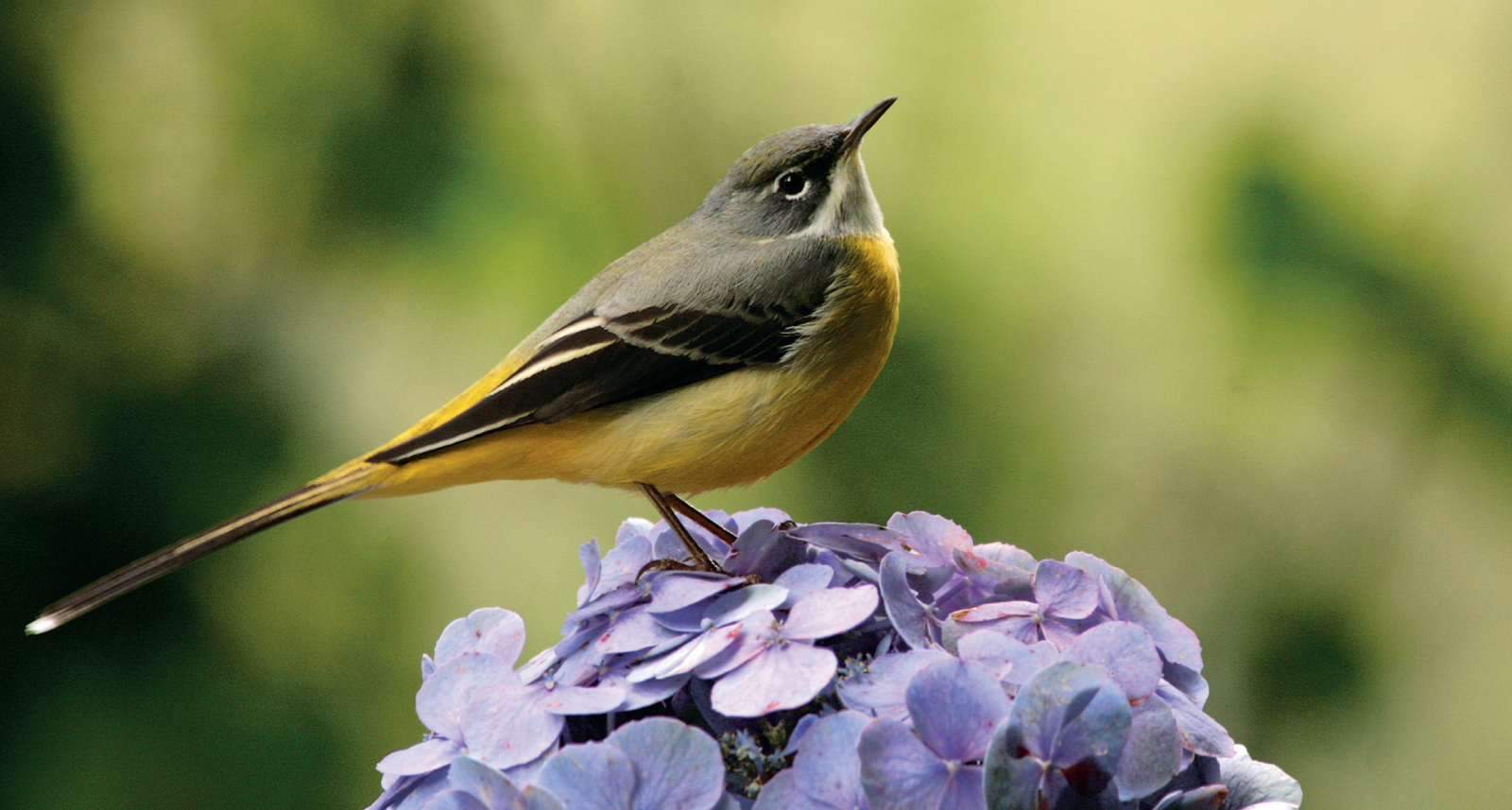Top Azores: 22 aves que tornam o céu no melhor lugar dos Açores