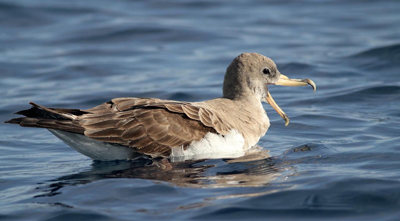 Saída Para Observação de Aves Marinhas
