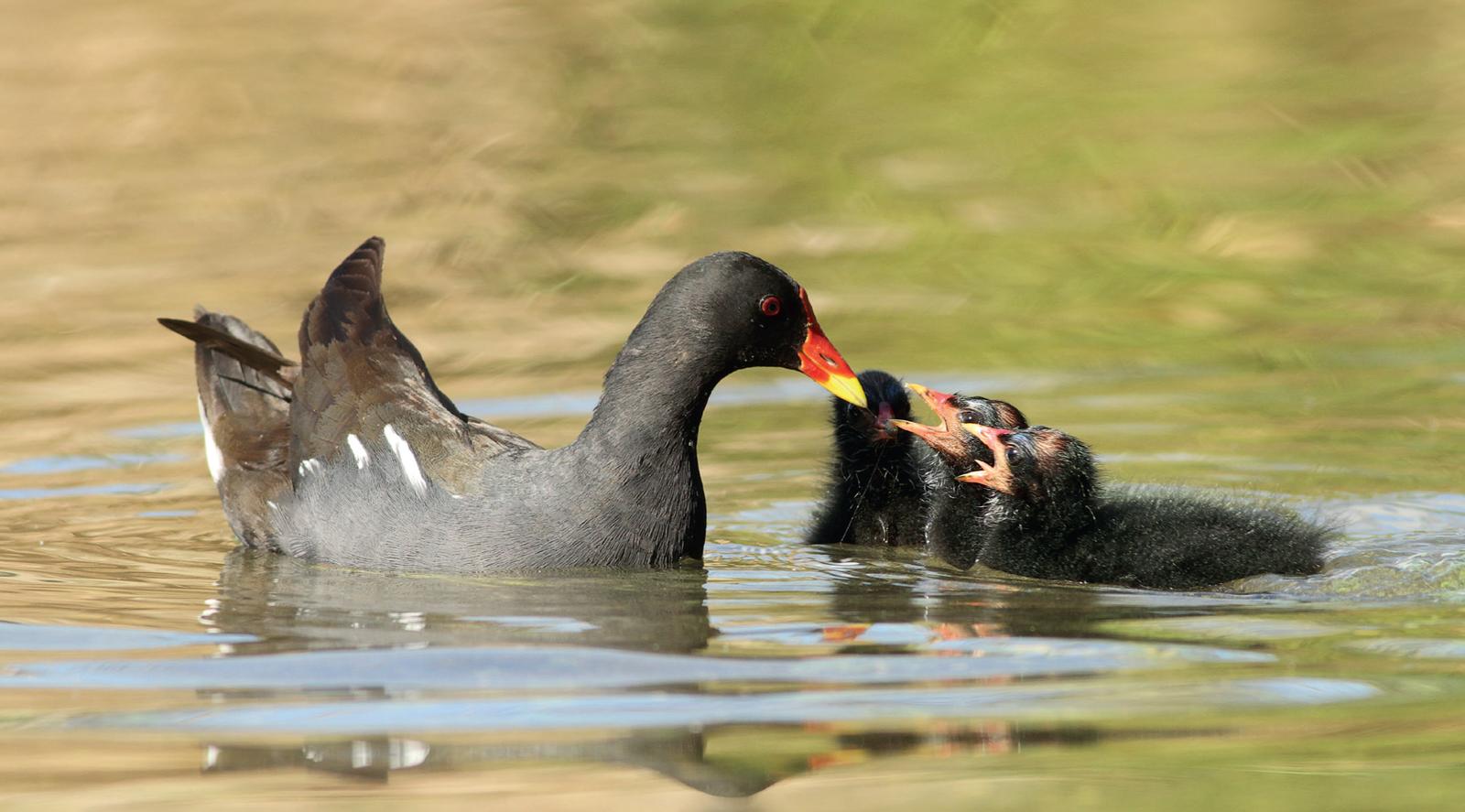 Ciência Viva no Verão – De Olho nas Aves