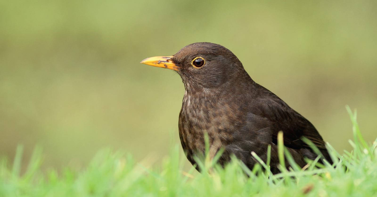 Ciência Viva no Verão – Os Sons das Aves