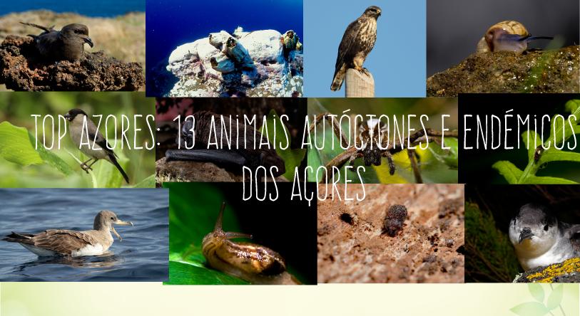 Top Azores: 13 Animais Autóctones e Endémicos dos Açores
