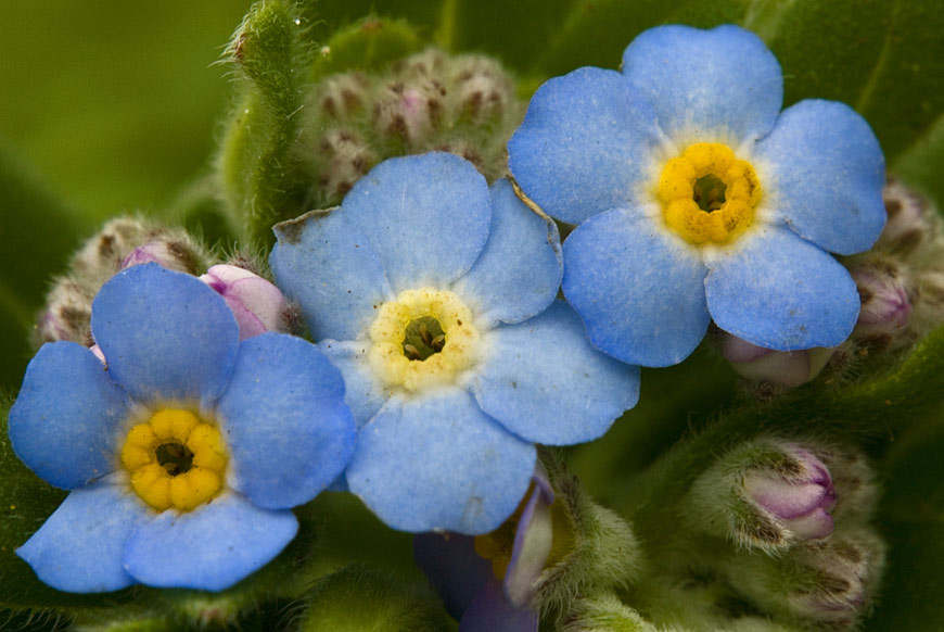 A Floresta Laurissilva e a flora endémica dos Açores – Top Azores
