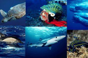 Top Azores: 20 criaturas fantásticas dos mares dos Açores