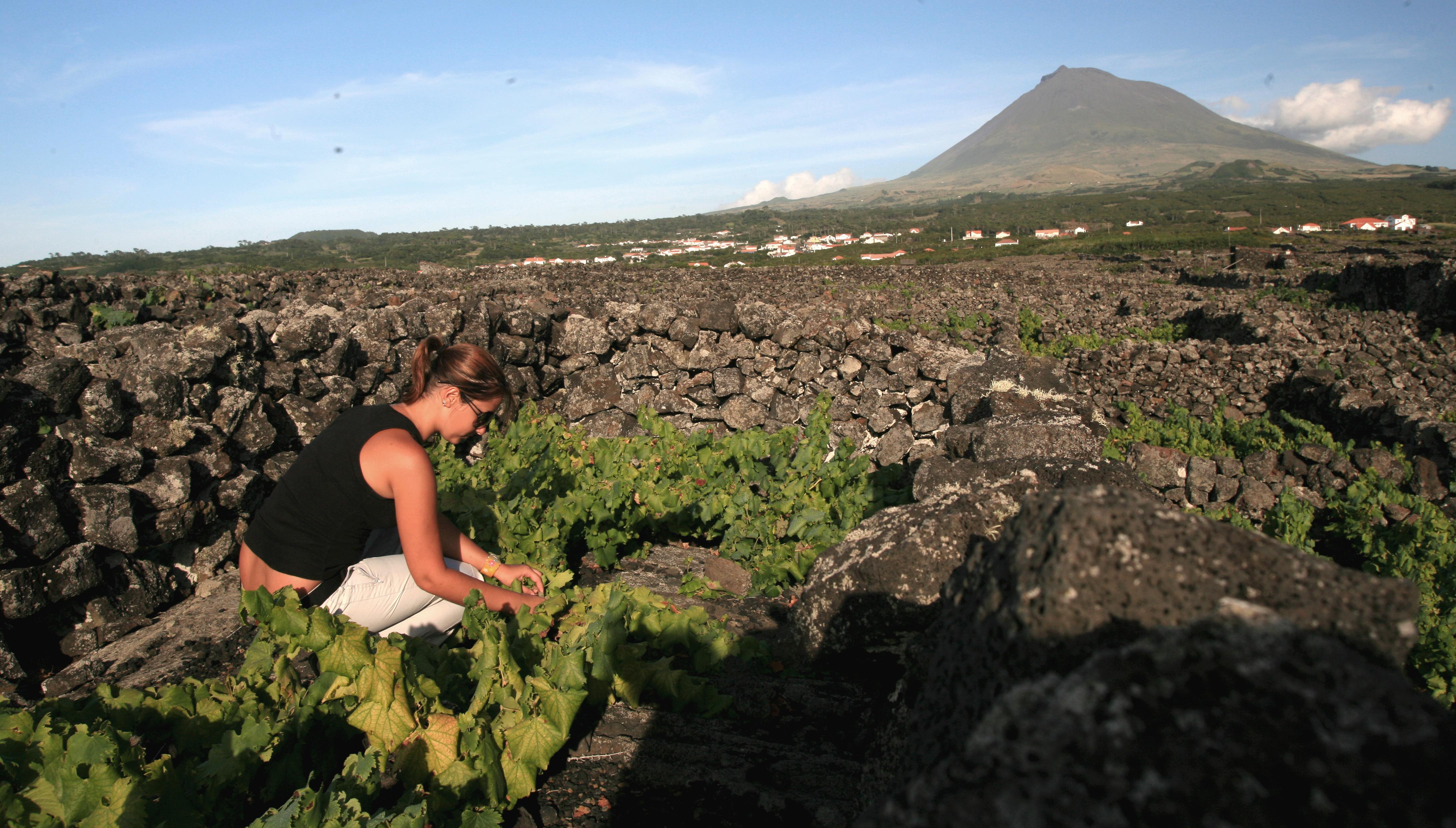 Top Azores: Paisagem da Cultura da Vinha da Ilha do Pico – Património Mundial da UNESCO