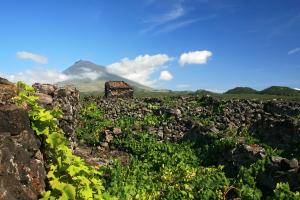 Top Azores: Lista dos 11 Melhores Vinhos Açorianos