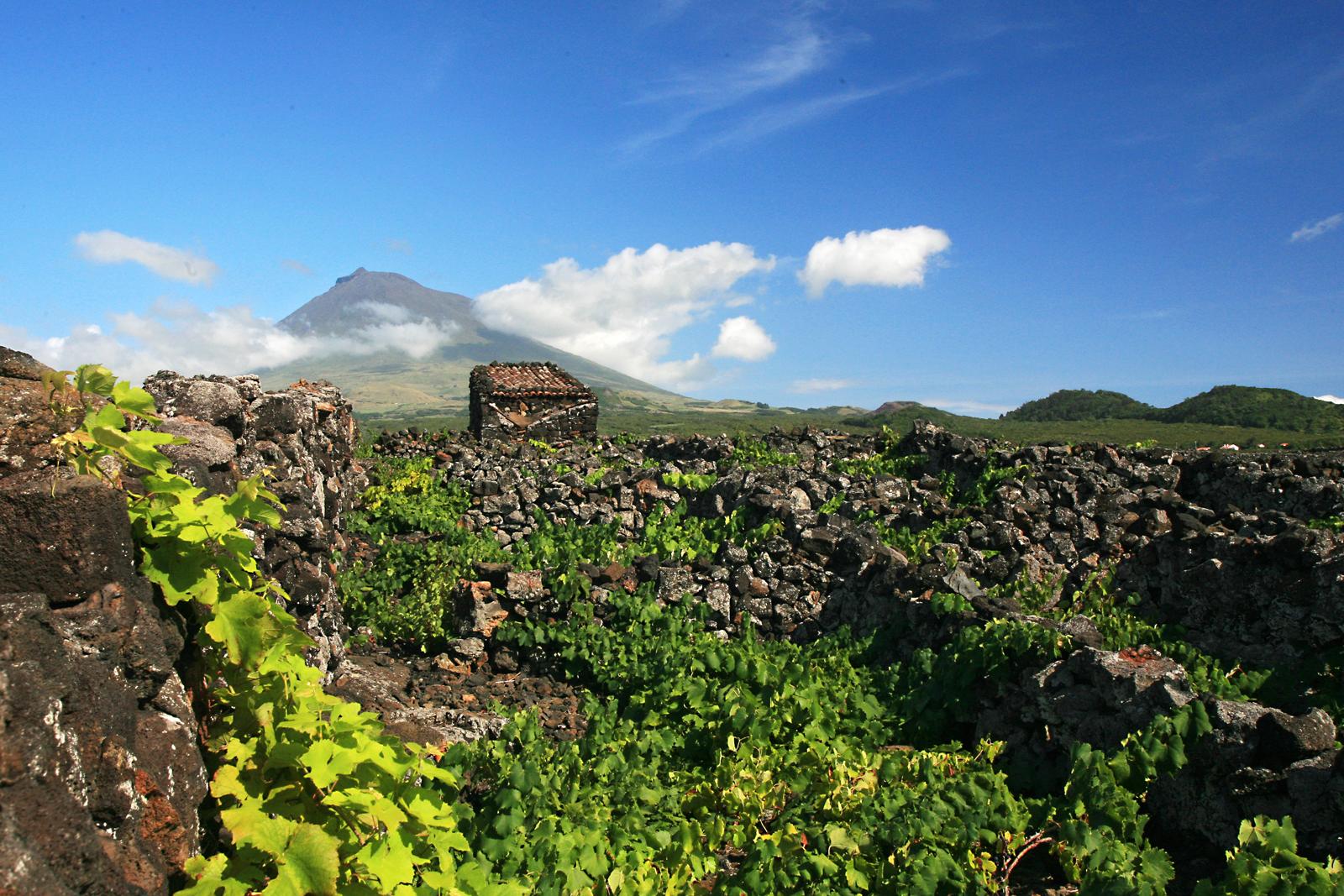 Top Azores: Chegou o Verão! 12 coisas a fazer nos Açores