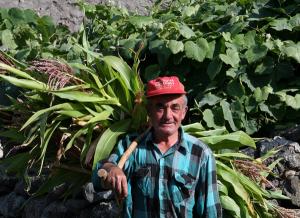Perspetivas para o desenvolvimento da agricultura biológica na ilha de São Jorge