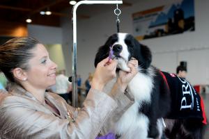 Exposição Canina na Ribeira Grande 2021