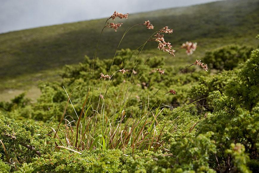 PN São Jorge – Pegadas do Parque