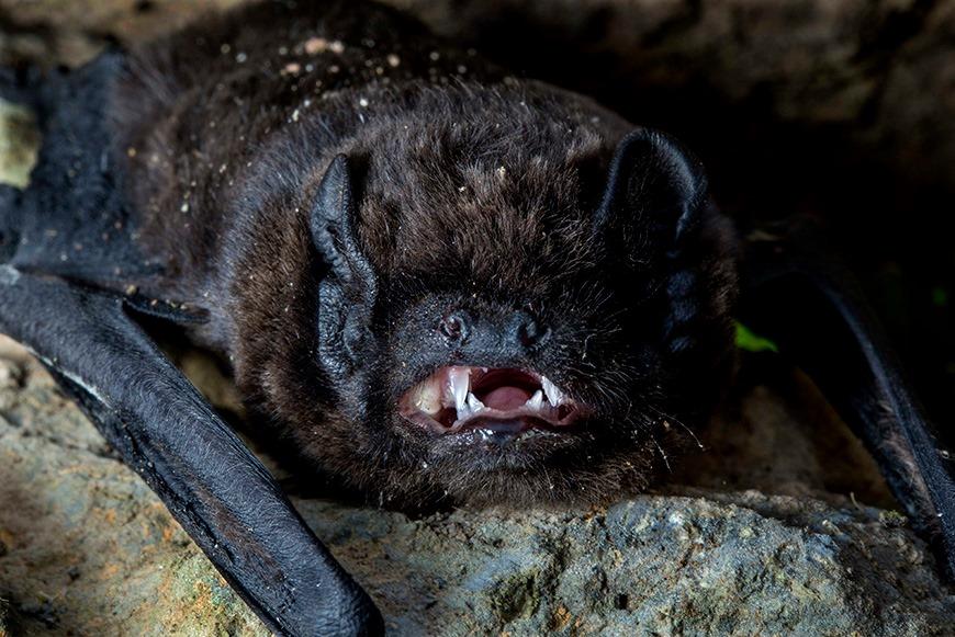 Noite Internacional dos Morcegos na Madalena