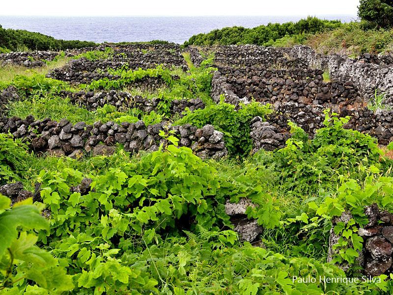 Conheça a sua ilha caminhando – trilho das vinhas