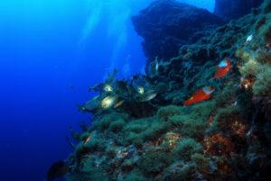 Áreas Marinhas Protegidas dos Açores – Rumo ao futuro!